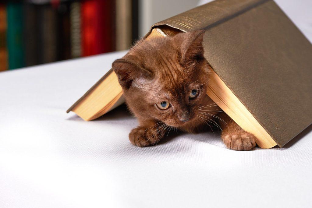 chaton et livre