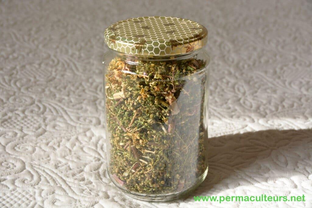 artémisia annua séchée en pot