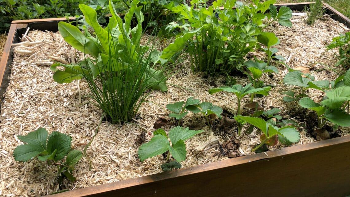 Tutoriel : réaliser & entretenir un bac en permaculture