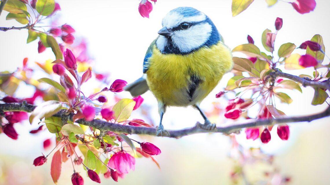 Que faire au jardin ce printemps ?